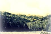 i dream og a little mountain home
