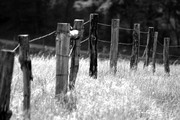 Richard's Challenge: Fenceposts