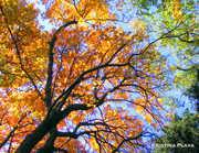 Heintooga Color