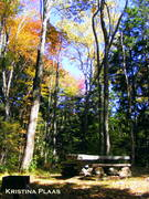 The Picnic Place