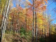 Tremont Colors