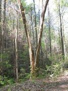 Tree along mw