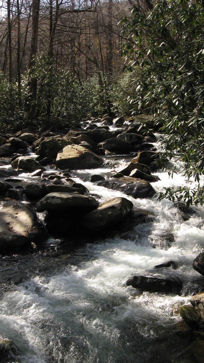 Footbridge Cascades on Porter's Creek Trail