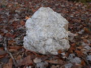 Ash Hopper Trail 11-25-12
