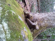 Tree growing on rock