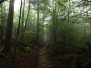 Foggy, Drippy Hike to Andrews Bald