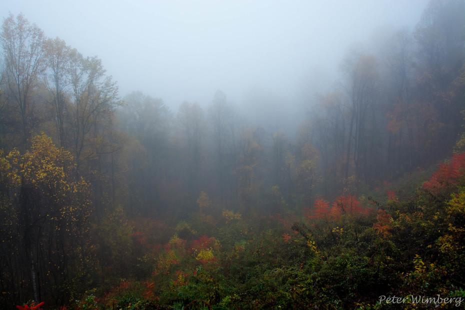 Foggy view 11-9-17