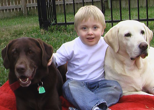 Daniel and Dogs