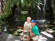 Parrot in Hawaii 008