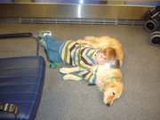 sleeping on Amber in the airport