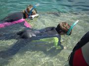 Shark Bait Boys Sea World Dive - 12-14 Dec 08 Dive 1 023 1