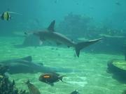 Shark Bait Boys Sea World Dive - 12-14 Dec 08 Dive 1 029