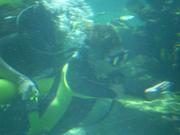 Shark Bait Boys Sea World Dive - 12-14 Dec 08 Dive 2 055 1