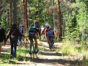Breck woods