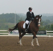 Draft Cross Owners, Breeders and Riders