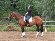 New horse Bella