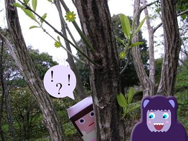 Mayuluca into the woods