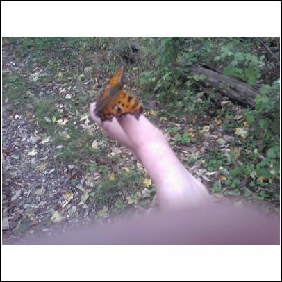 Butterfly on my finger 11-05-08
