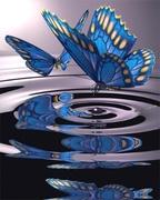 butterfly water