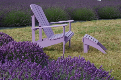 Purple chair in lavender