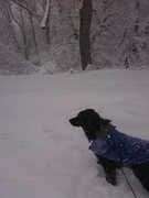 A journey with my dog in the snow