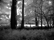 Woods and Field in Infrared