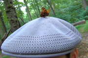 Butterfly on my hat...