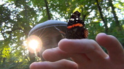 Butterfly on my hand 7-23-13