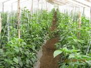 Producciones Agricolas en Guatemala