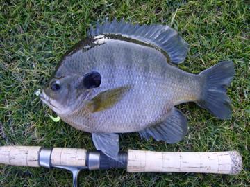 Dec 26, 2008 Fishing