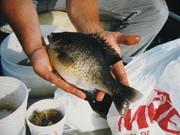 fish 030