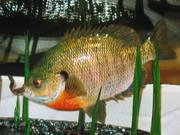 fish 019