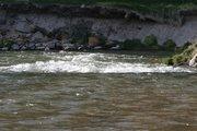 MI trout river (1)