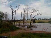 TX pond birds