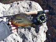 Santa Fe River 2-3-13 032