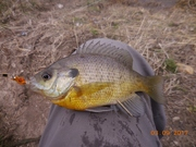 ANOTHER SMALL ONE ON RED&YELLOW MICRO