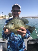 My Biggest Redear to Date! Of Course From Havasu!, 3 lbs