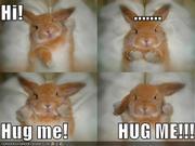 Bunnies Rule