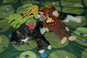 Stuff On My Cat