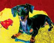 murphy dachshund