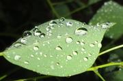 Leaf Drop 2