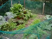 Kats Garden