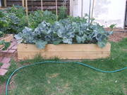 frontal view of my vegi garden