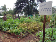 Grow N Show @ Kelmarna Organic City Farm
