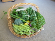 Backyard Organics