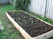 My new garden box 6