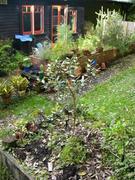 2004-06-14-feijoa-planted