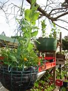 Winter Garden 2010-01
