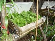 Winter Garden 2010-13