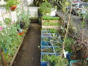 Winter Garden 2010-08
